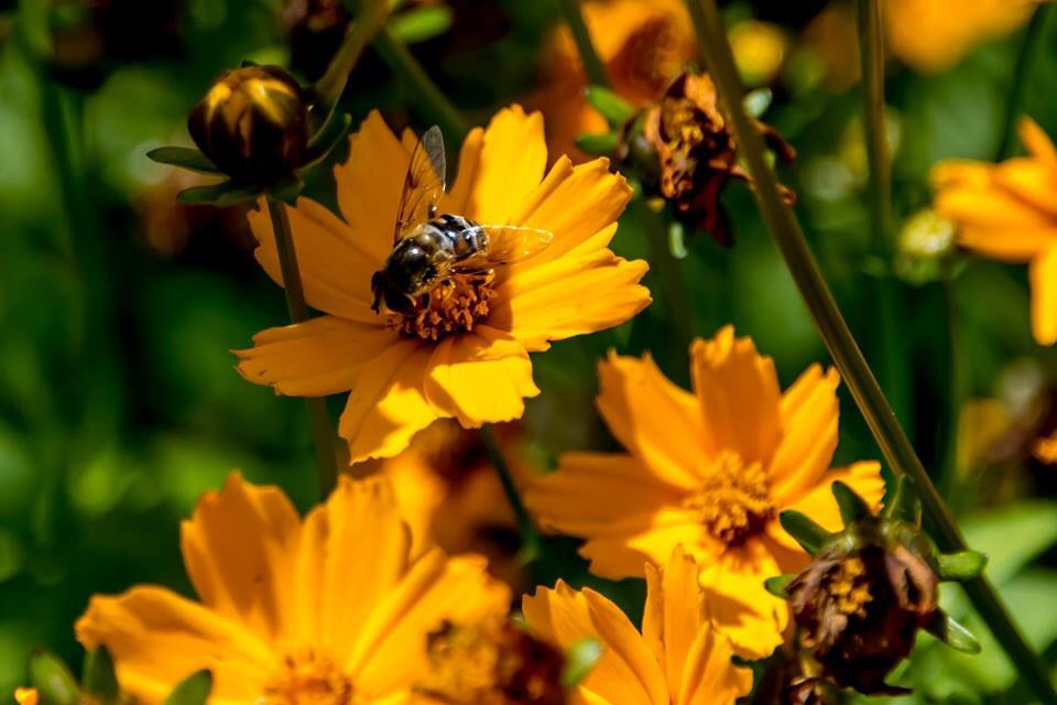 Flowers and Bees.jpg - Flowers and Bees by Dennis Rose