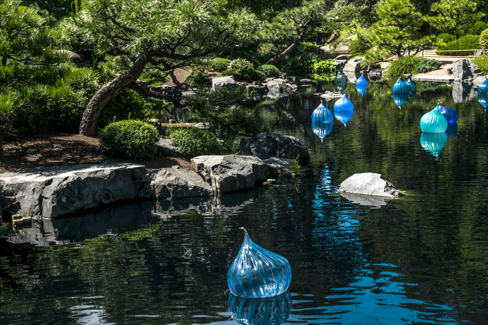 Chihuly Floating Balls.jpg -  by Dennis Rose
