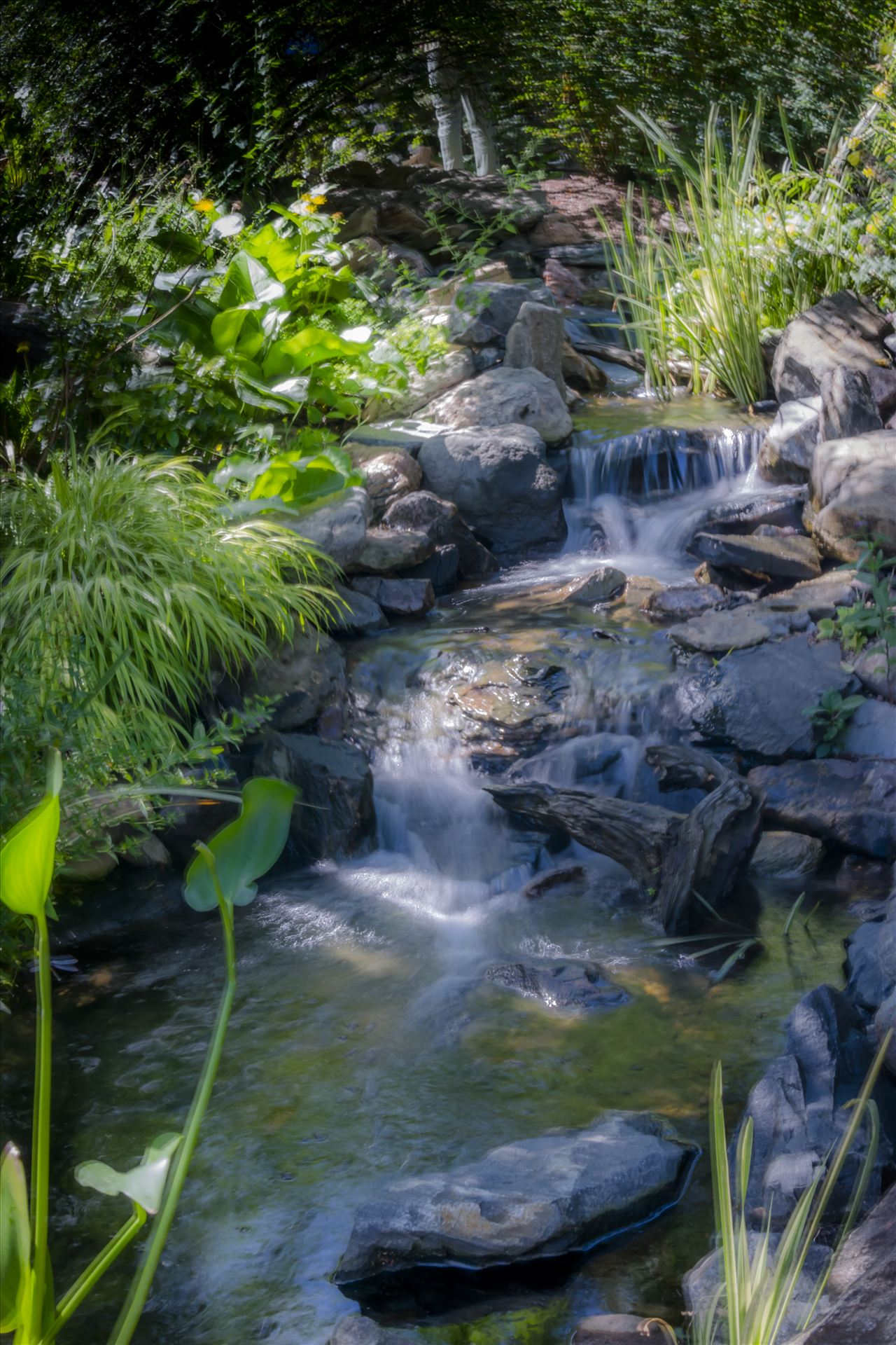 Denver Botanical Garden Falls.jpg -  by Dennis Rose