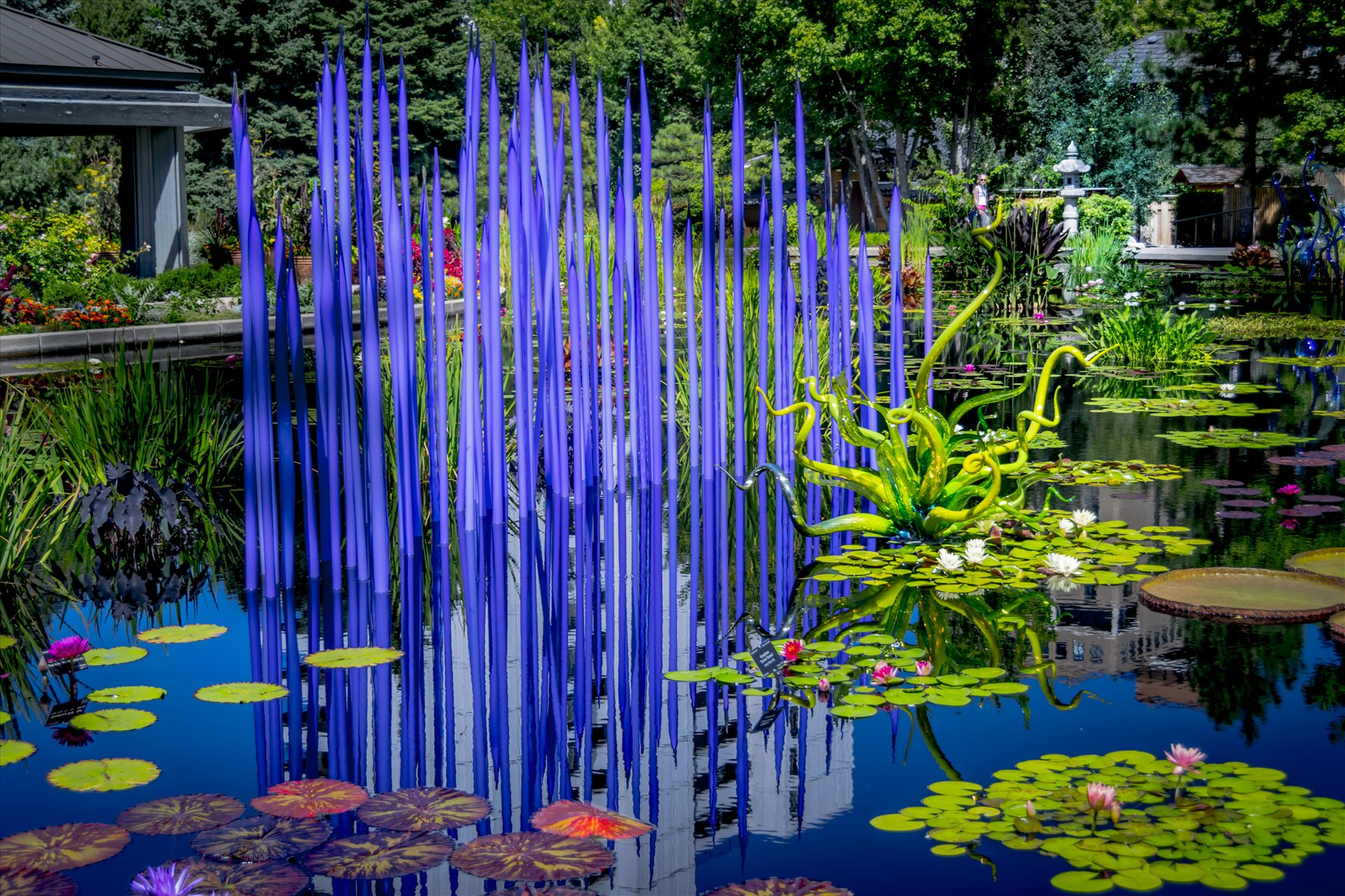 Chihuly Pond.jpg -  by Dennis Rose