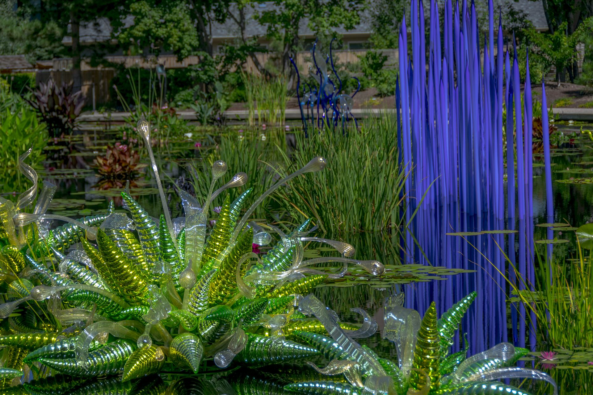 Chihuly Pond Glass.jpg -  by Dennis Rose
