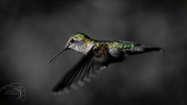 Hummingbirds -